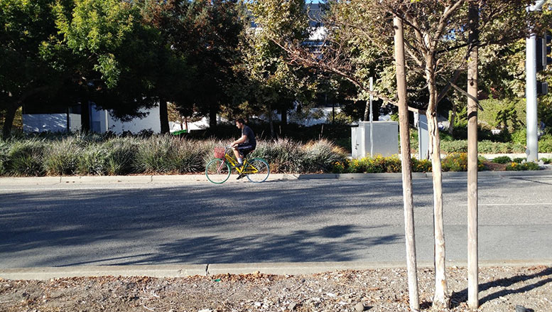 A Google employee pedals between buildings at their Mountain View campus